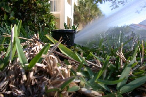 Low Sprinkler